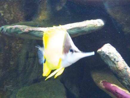 "National Aquarium - ""hast du, hast du, hast du?"" ;)"