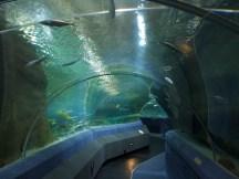 National Aquarium - Unter dem Ozeanium