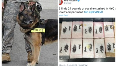 Photo of Perro de la DEA delata a narcos dominicanos que escondían 24 libras de cocaína