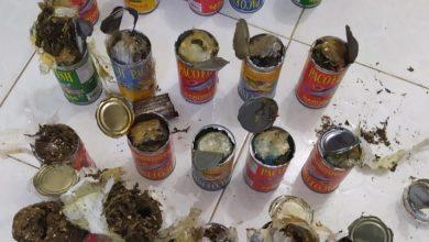 Photo of Ocupan en latas de sardinas marihuana y cocaína serían introducidas a cárcel La Victoria