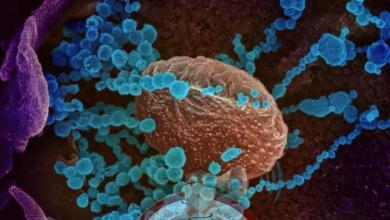 Photo of ¿Existen personas con inmunidad natural al coronavirus sin haberse vacunado ni contagiado previamente?