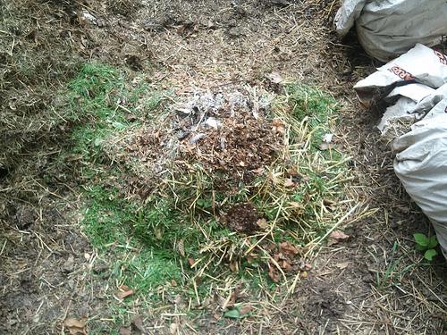 Alt Bokashi Bucket Burying (3/4)
