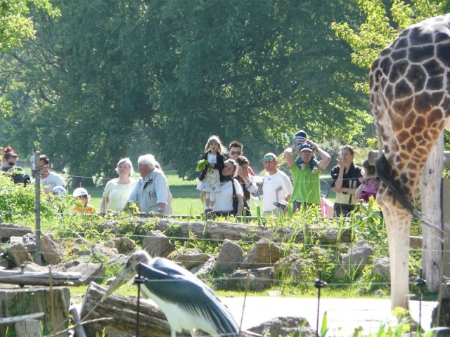Das besagte Gehege befindet sich am Rand des Zoos. Daran schließt das sogenannte Rosenthal an - ein recht schnuckeliger Park, von dem aus man an manchen Stellen sehr gut in den Zoo blicken kann. Hier ist also der Pöbel zu sehen, der es sich nicht leisten kann, den Eintritt zu bezahlen.
