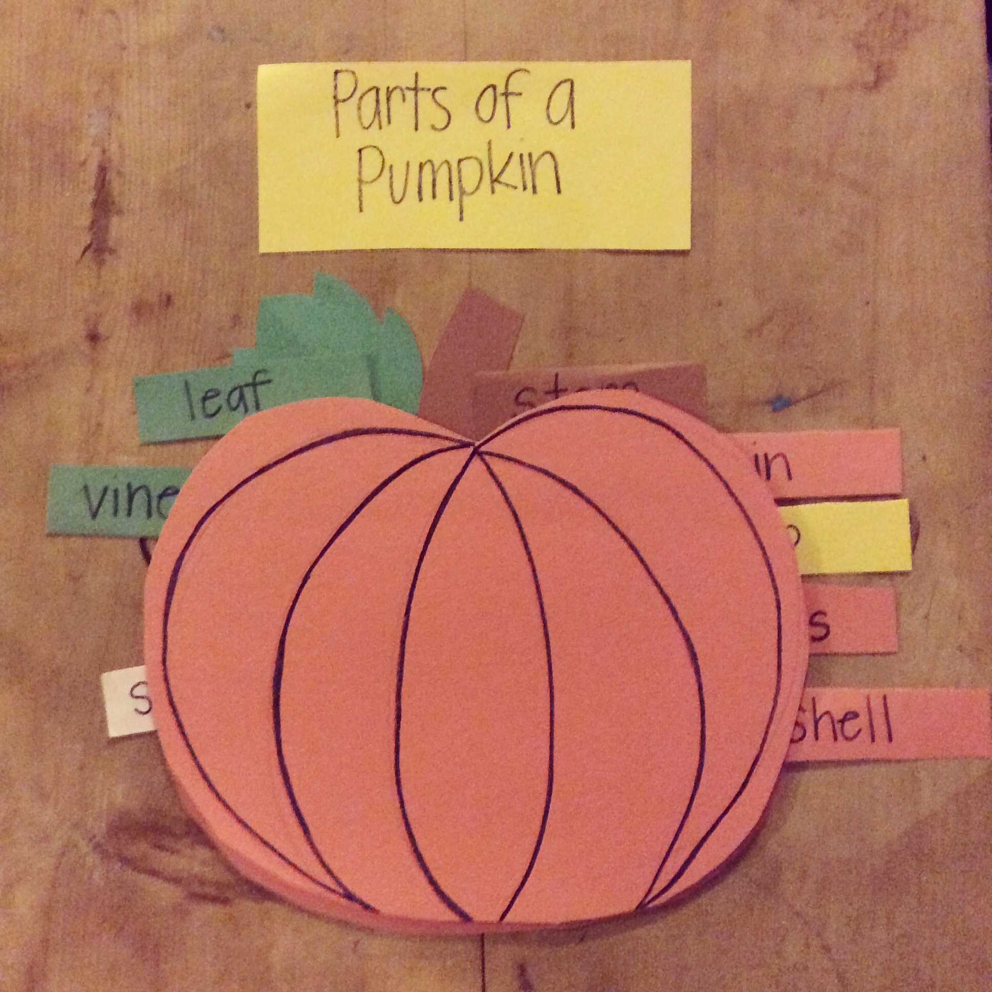 Homeschool Parts Of A Pumpkin