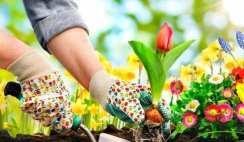 Easy Home Vegetable Gardening Tips for Beginners
