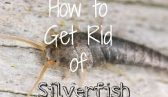 How to Get Rid of Silverfish Naturally -14 Home Remedies