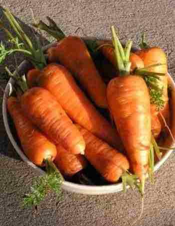 Nantes Carrot