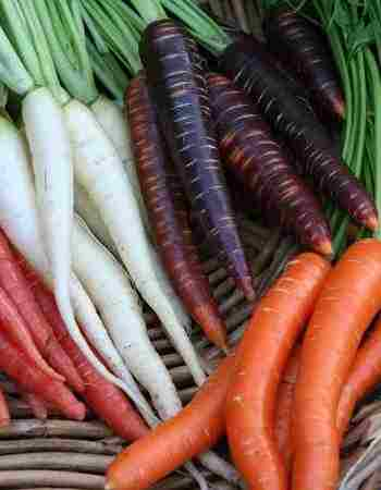 How to Grow Carrots from Seeds to Harvest at Home
