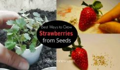Best Ways to Grow Strawberries from Seeds at Home