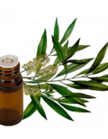 Tea Tree Essential Oil for Pimples