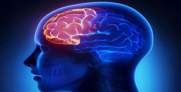 El cerebro con agua