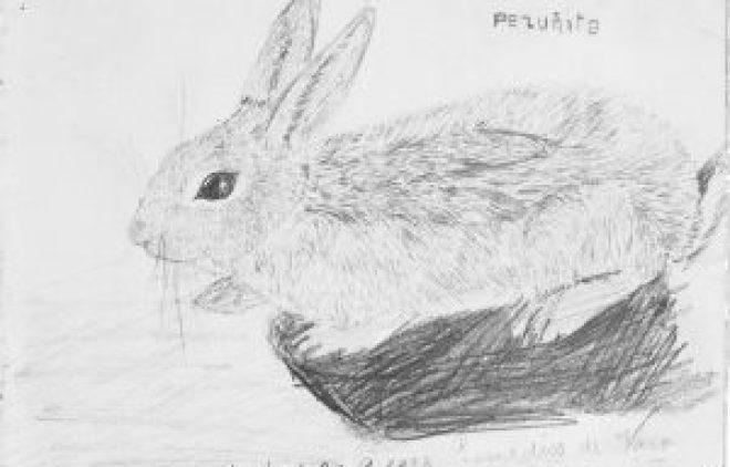 Cat.6 El Conejo Pezunita 1923
