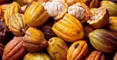 Sabes Cómo preparar una infusión de cacao