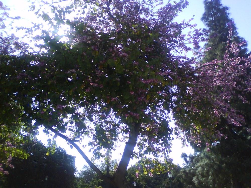 Me gustan los árboles de Málaga...y las flores (3/6)