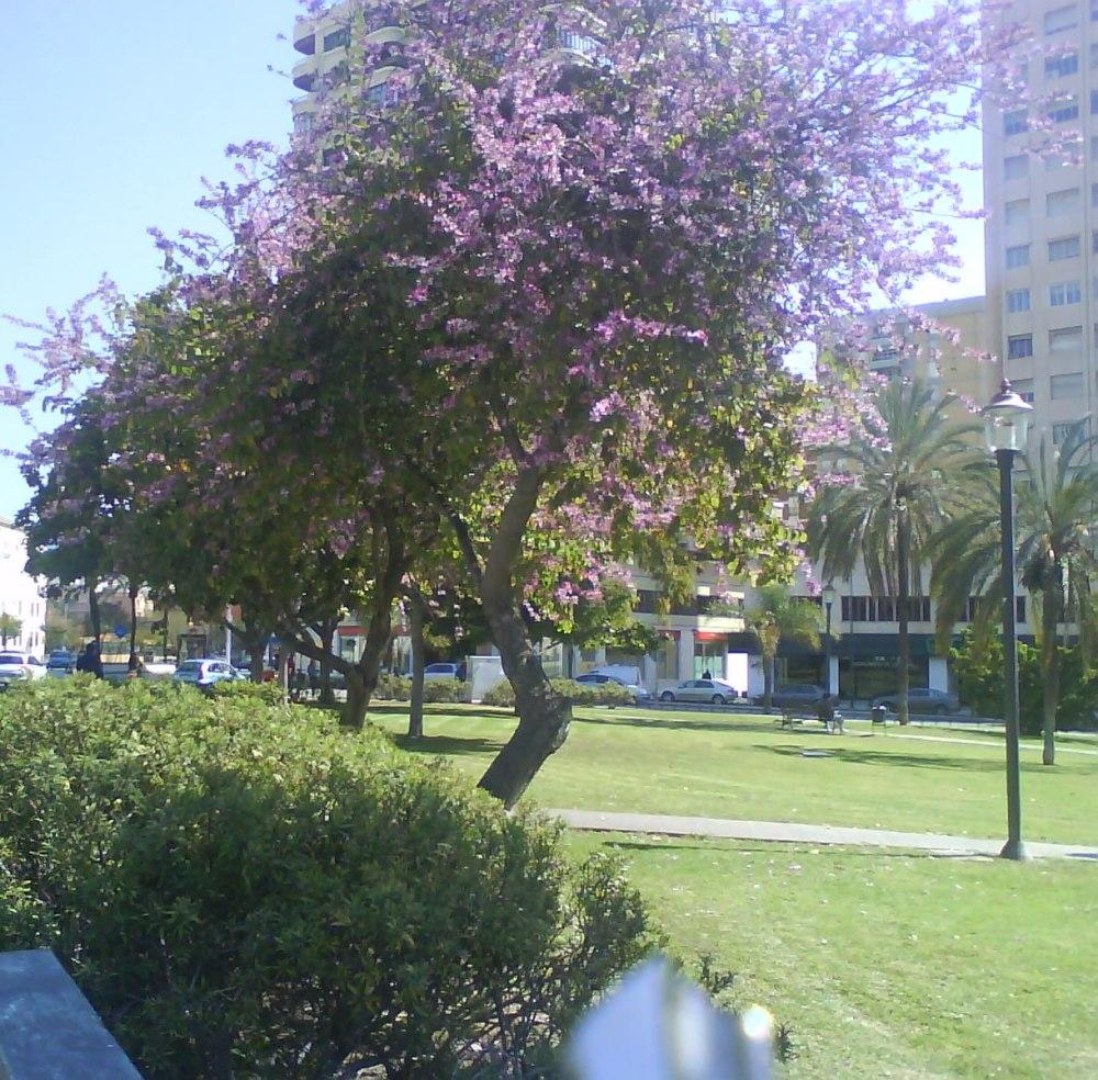 Me gustan los árboles de Málaga...y las flores (4/6)