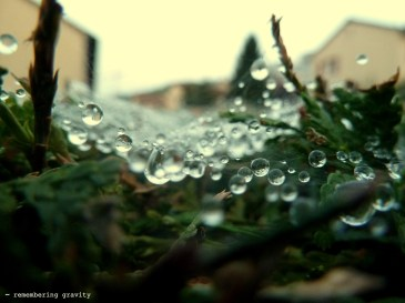 Droplets in a web