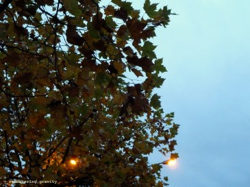 Street lights and Acer