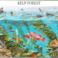 Kelp Forest Food Web Diagram Photosynthesis And Cellular Respiration  Nature Of America Remembering Letters