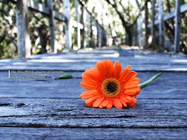 Chrysanthemum Road