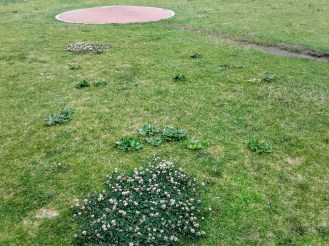 Infield-Rosenblatt-weeds