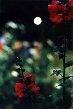 Le dire avec des fleurs