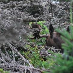 Cape Breton - Nova Scotia - Highlands state park