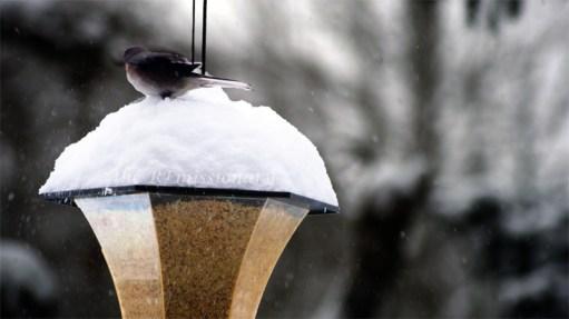 hi little birdies