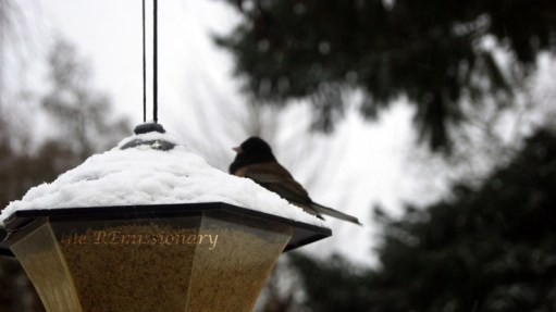 just starting to accumulate - birds love the backyard diner
