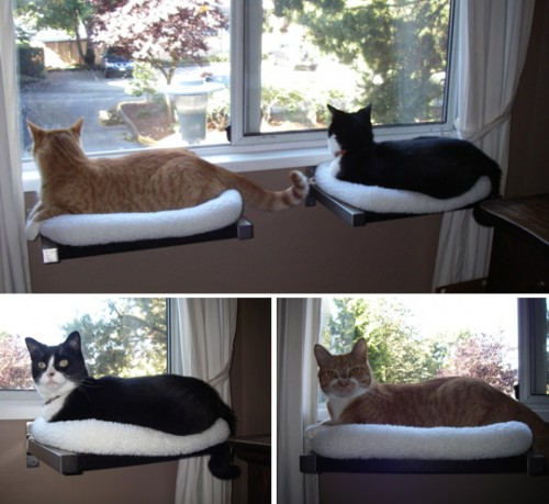 cat window perches