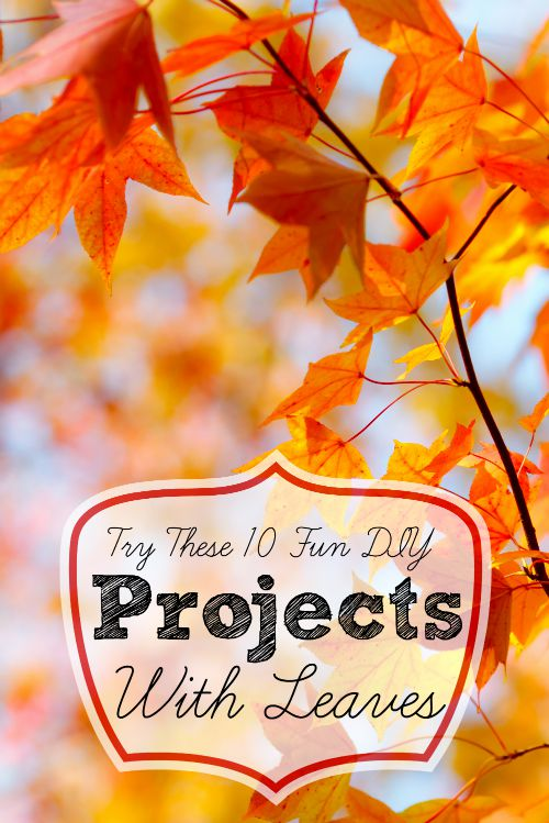 Remodelaholic Try These 10 Fun Diy Projects With Leaves