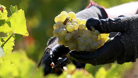 140108155523_grapes_464x261_ramonmartinez