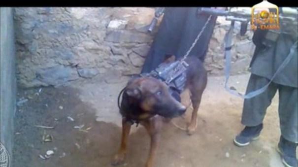 base image El Talibán captura a Coronel, perro gringo de combate [video]