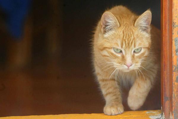 08-cat_135419