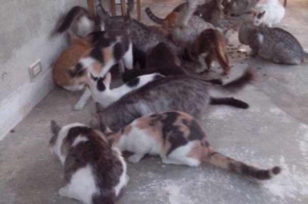 91ad263b3f46c290e97080f9ca7a24b5 620x412 Mujer bautiza sus 52 gatos con nombre de fokiuses