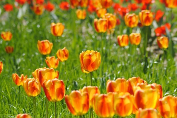 img poemas para la primavera 7346 orig ¡La Primavera llegó!