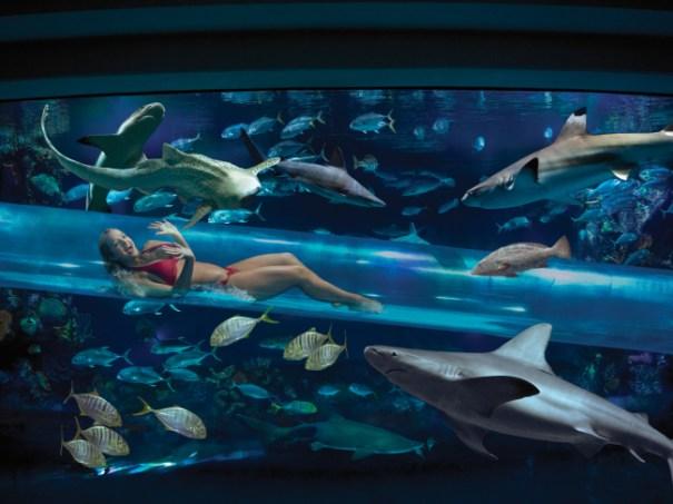 sharkchute