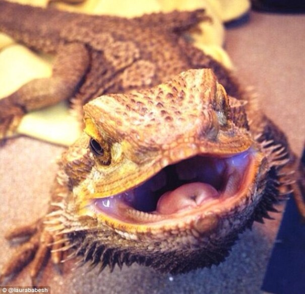 image4 El top 5 de los selfies de animales