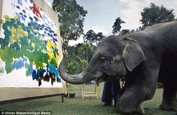 20140617 160250 57770267 Elefantes que pintan con sus trompas [fotos]