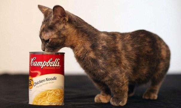 image148 Pixel podría ser el gato más pequeño del mundo [fotos]
