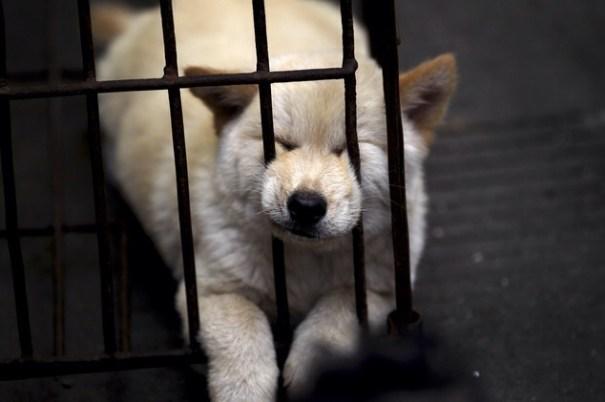 image74 China bajo fuego por celebrar el solsticio de verano con evento de comer perros