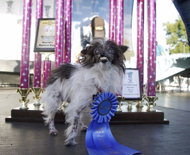 image92 Peanut, el perro más feo del mundo [foto]