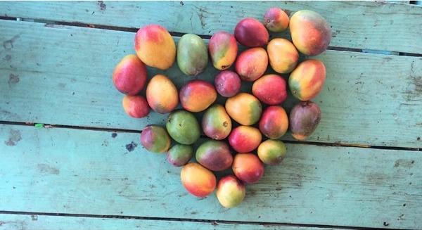 mango corazon Remedio de mango, Sicarios, S. A,  huracán Arthur y mas   [Rapiditas]