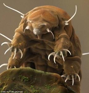 bb Los animales acuáticos más raros y feos del Mundo