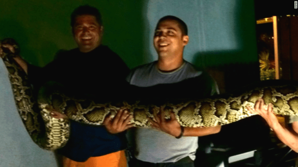 141218080250-15-foot-python-found-at-restaurant-story-tablet
