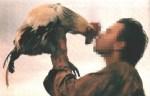 besando gallina