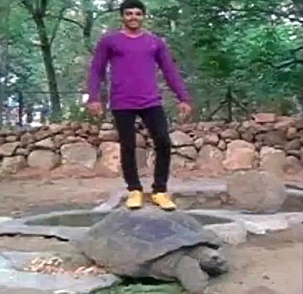 Turtle Idiot As Shell-fie Stunt Gets Zoo Visitor Arrested