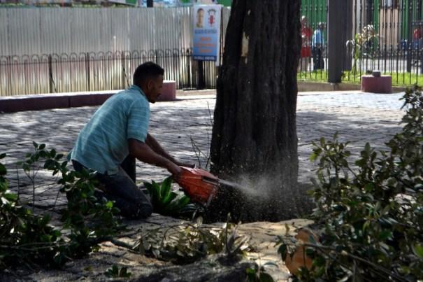 10001426028092jpg 700x466 Alcaldía Santiago tala árboles históricos sin autorización