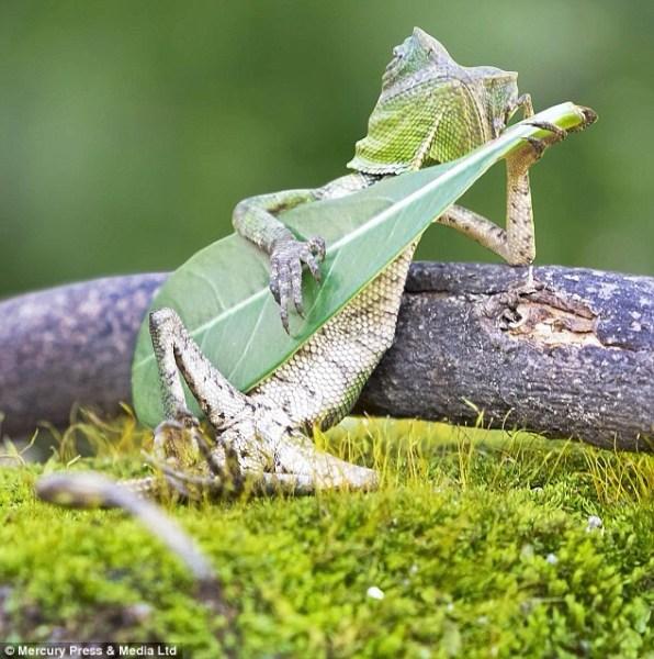 image316 Dique no hubo fotoshopeo en el lagarto rockero