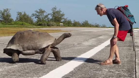 tortoise Video   Lo que sucede cuando interrumpes apareamiento de tortugas
