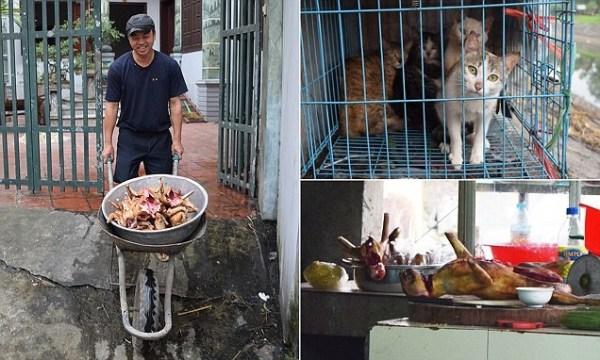image273 Auge en Vietnam de robar gatos para servirlos en restaurantes